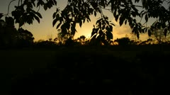 Flower Goldfields 13 Dolly Up Sunset Leaves California RAW Stock Footage