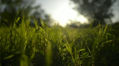 Green Grass Sunlight 02 Dolly L Stock Footage