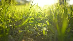 Green Grass Sunlight 04 Dolly L Stock Footage
