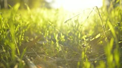 Green Grass Sunlight 05 Dolly R Stock Footage
