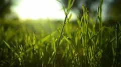Green Grass Sunlight 06 Stock Footage