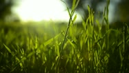 Stock Video Footage of Green Grass Sunlight 06 Fix RAW