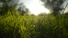 Green Grass Sunlight 14 Dolly R - stock footage