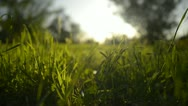 Stock Video Footage of Green Grass Sunlight 14 Dolly R RAW