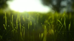 Green Grass Sunlight 17 Dolly In Stock Footage