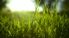 Green Grass Sunlight 19 Dolly in Stock Footage