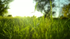 Green Grass Sunlight 20 Dolly In Stock Footage
