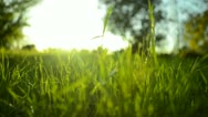 Stock Video Footage of Green Grass Sunlight 20 Dolly In RAW