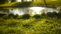 Green Grass Sunlight 21 Dolly R Pond Stock Footage