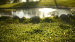 Green Grass Sunlight 23 Dolly R Pond Stock Footage