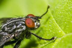 Housefly - stock photo