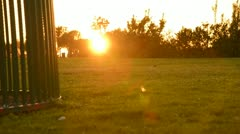 Park Sunset 03 Dolly Down R Grass Stock Footage