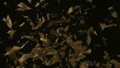 Dried leaves falling, Slow Motion - stock footage