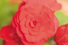 Flower Festival Stock Photos