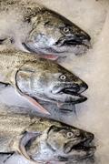 three fresh fish - stock photo