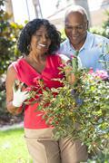 senior african american man woman couple gardening - stock photo