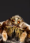 Stock Photo of wolf spider cutout