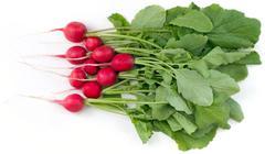 Stock Photo of radish