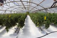 Stock Photo of inside the greenhouse