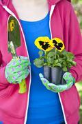 Pansy gardener Stock Photos