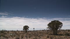 Quiver Tree,Karoo landscape 2,South Africa Stock Footage
