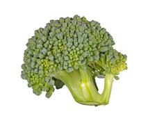 floret of broccoli isolated against white - stock photo