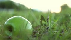 green aplle falling from the tree - stock footage