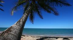 Coconut Palm Tree Stock Footage