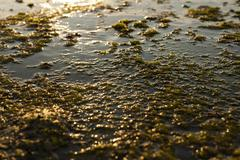Algae rock Stock Photos