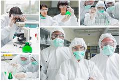 Stock Photo of Collage of laboratory workers