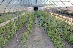 Conservatory Stock Photos