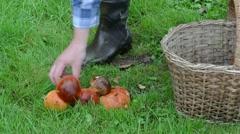 Man hand take orange-cap boletus mushrooms basket grass Stock Footage