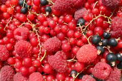 asorted fruits - stock photo
