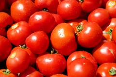 A pile of dewily red tomatoes Stock Photos