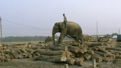 Working Elephant - Bangladesh Stock Footage