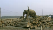 Stock Video Footage of Working Elephant - Bangladesh