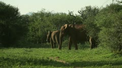 Elephants with baby - stock footage