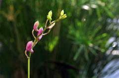 Violet orchid bud Stock Photos