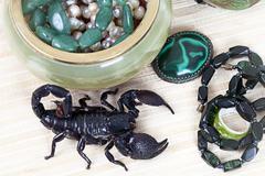 Emperor scorpion with women's adornment Stock Photos