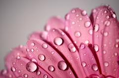 Drops of water on the flower Stock Photos