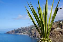 Stock Photo of Aloe in front of the Atlantic Ocean  Madeira