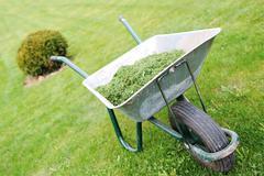 Stock Photo of gardening season - green lawn with wheelbarrow