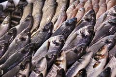 fish for sale - stock photo