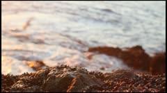 Seagull on tidepools in Laguna beach Stock Footage