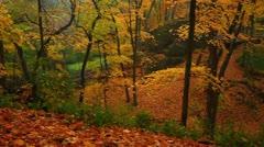 Illinois Autumn Forest Stock Footage