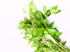 bunch of sweet basil , ocimum basilicum,isolated on white background - stock photo
