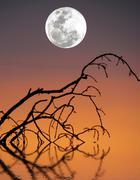 Full Moon - stock photo