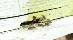 Honey bees infront of hive enterence Stock Footage