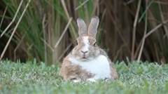 Rabbit in the farm Stock Footage