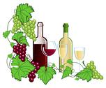 Stock Illustration of Vineyard